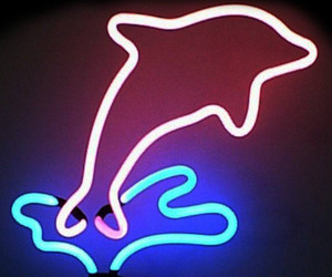 aesthetic, dolphin, and neon lights image