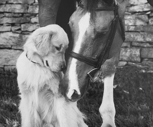 horse, dog, and animal image