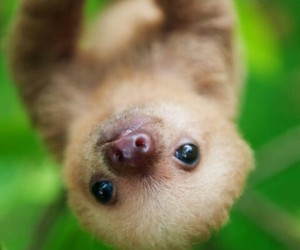 animal, sloth, and baby image