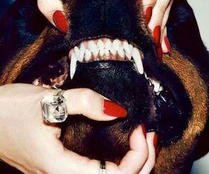 dog, moda, and fashion image