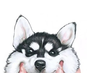 dog, wallpaper, and husky image