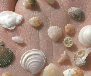 shell, aesthetic, and theme image