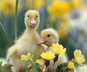 bird, duck, and pajaro image