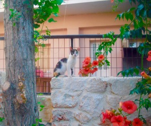 cats, flowers, and Greece image