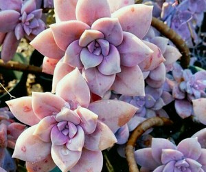 flowers, succulent, and nature image