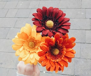 aesthetic, flowers, and inspirational image