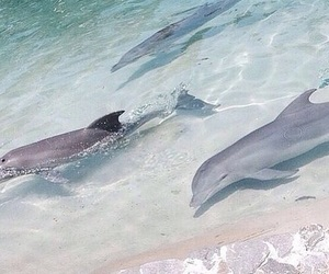 aesthetic, dolphins, and ocean image