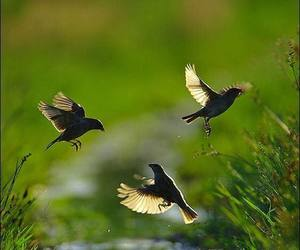 birds, green, and nature image
