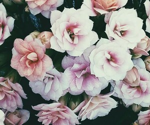 april, beautiful, and flowers image
