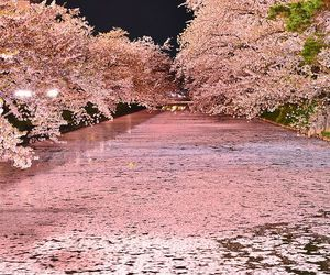 japan, sakura, and cherry blossom image