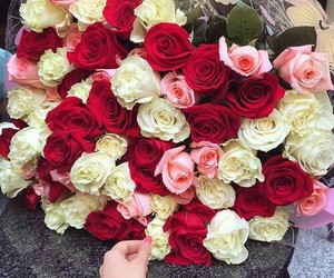 beautiful, gorgeous, and roses image