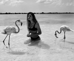 girl, flamingo, and beach image