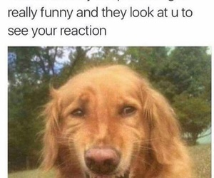 funny, meme, and dog image