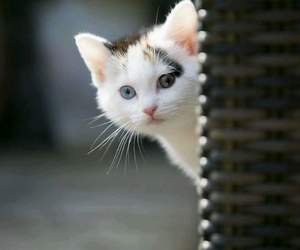adorable, beautiful, and kitten image