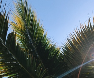 beautiful, green, and palm trees image