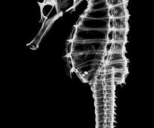seahorse, unicorn, and black and white image