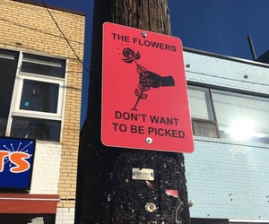 flowers, red, and sign image