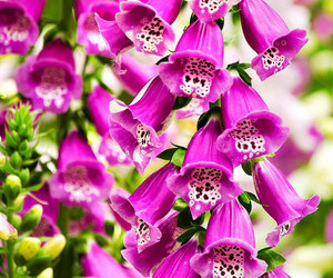 etsy, flower photography, and flower print image