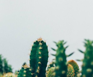 cactus, plant, and plants image