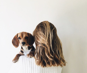 dog, animal, and girl image