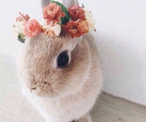 so cute, white rabbit, and flower image