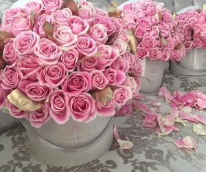 perfection, pink, and roses image