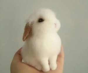 rabbit, tiny, and cute image