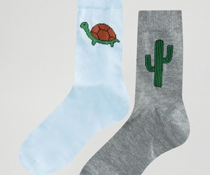 cactus, grey, and turtle image