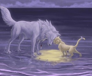 wolf and cat animal image