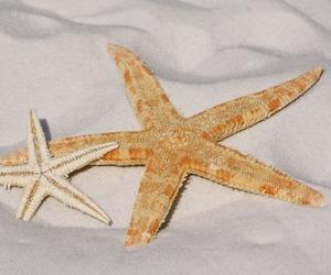 beach, sunshine, and sea stars image
