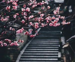 flowers, path, and cute image