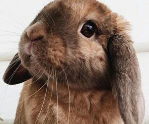 animal, cute, and bunny image