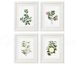 etsy, plant, and flower image
