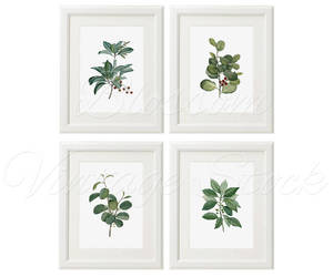 botany, botanical art, and botanical prints image