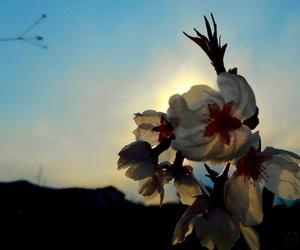 桜, 夕日, and 空 image