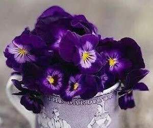 flowers, cup, and pansy image
