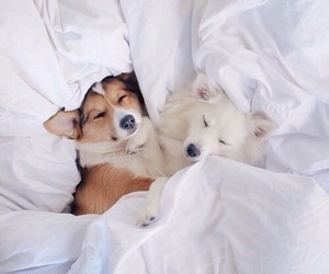 bed, dogs, and want image
