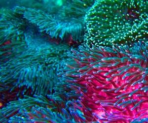 aquatic life, bright, and coral reef image