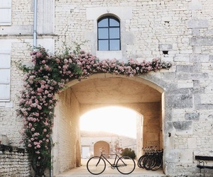 beautiful, flowers, and travel image