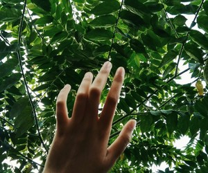 green, hands, and tree image