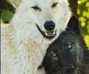 friendship, wolf, and wolves image