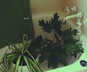 bath, green, and plants image