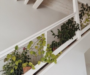 plants, white, and stairs image