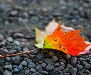 leave autumn image
