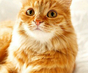 cat and phone wallpaper image