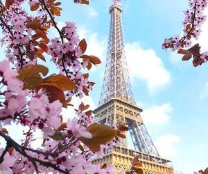 flowers, holidays, and france image
