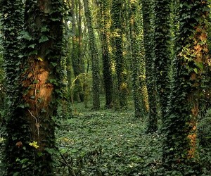forest and ivy image