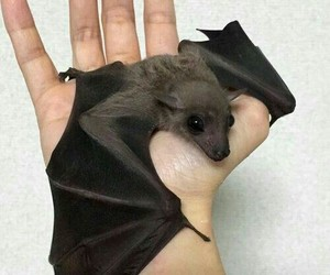bats, indie, and lovely image