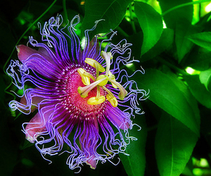awsome, flowers, and colors image