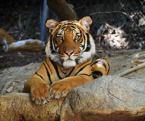 beast, big cat, and skin image